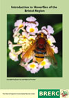 Introduction to Hoverflies of the Bristol Region guide (£5.00)